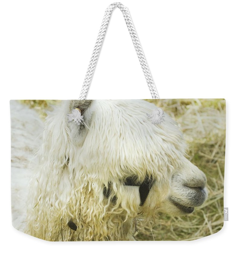 Alpaca Weekender Tote Bag featuring the photograph White Alpaca Photograph by Keith Webber Jr
