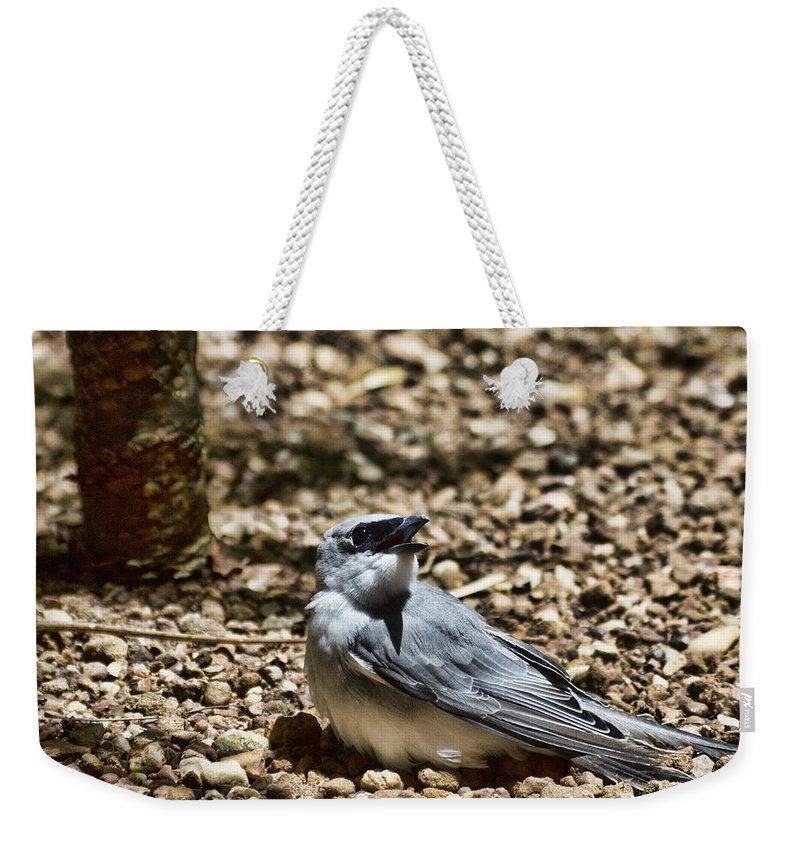 White-bellied Cuckoo-shrike Weekender Tote Bag featuring the photograph White-bellied Cuckoo-shrike by Douglas Barnard