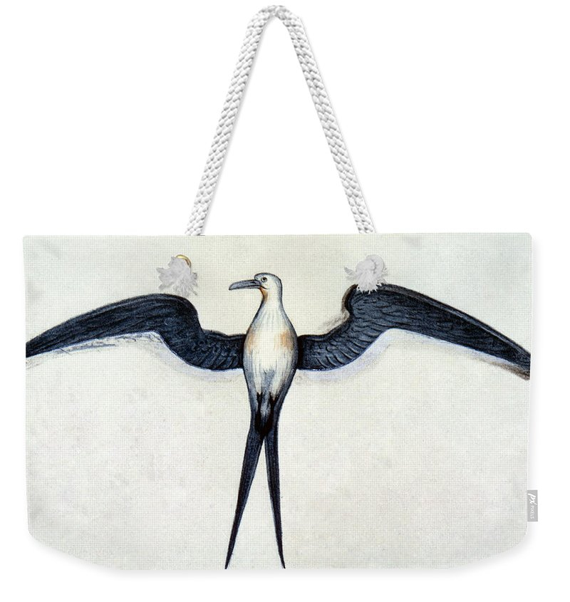 1585 Weekender Tote Bag featuring the photograph White: Frigate Bird by Granger
