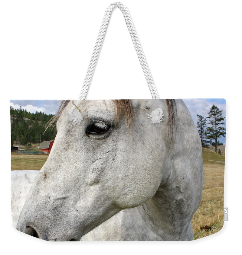 Horse Weekender Tote Bag featuring the photograph White Horse Closeup by Terry Fleckney