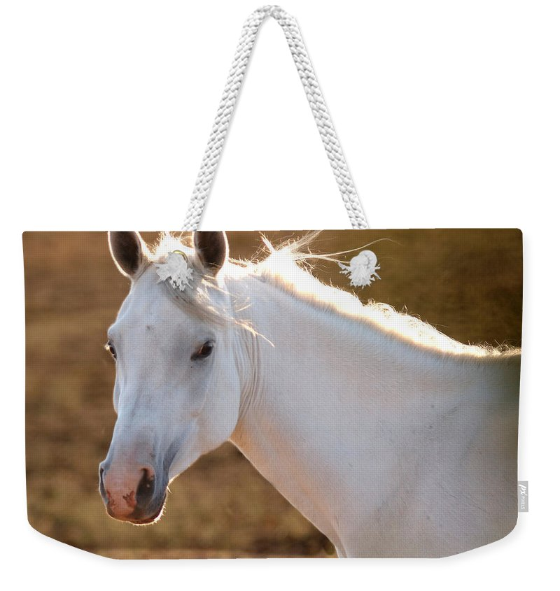 Horse Weekender Tote Bag featuring the photograph White Horse by Sean Wray