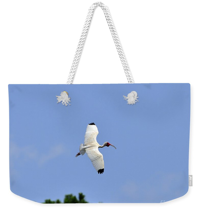 Ibis Weekender Tote Bag featuring the photograph White Ibis In Flight by Al Powell Photography USA