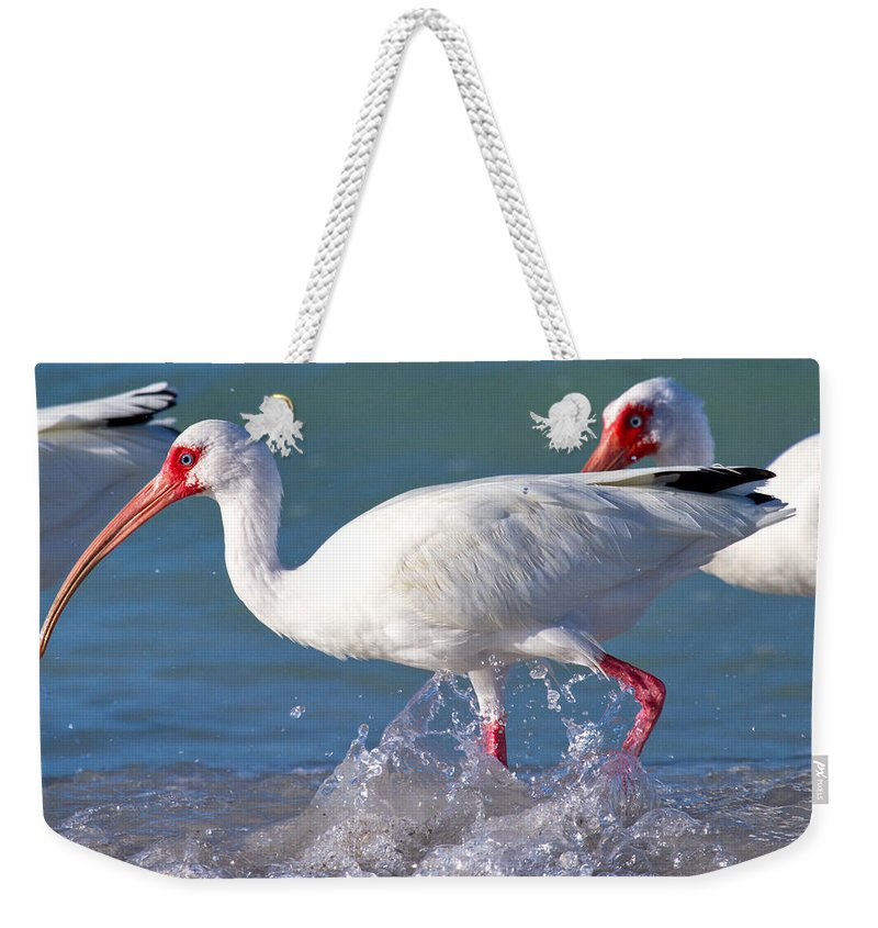 Coquina Weekender Tote Bag featuring the photograph White Ibis On The Shore by Betsy Knapp