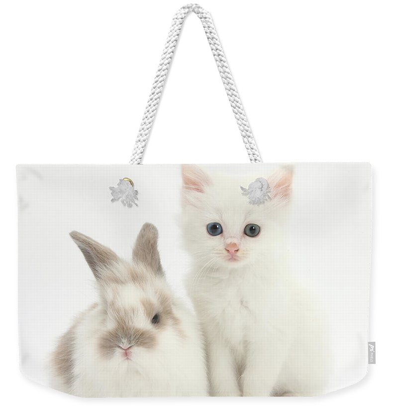 Nature Weekender Tote Bag featuring the photograph White Kitten And Baby Rabbit by Mark Taylor
