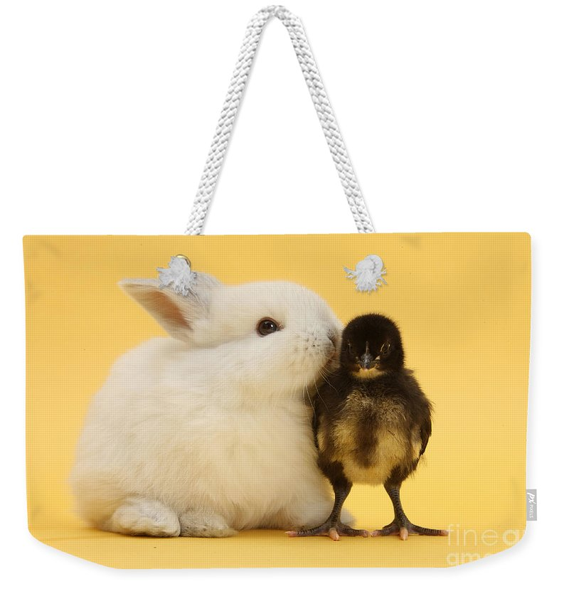 Nature Weekender Tote Bag featuring the photograph White Rabbit And Bantam Chick On Yellow by Mark Taylor