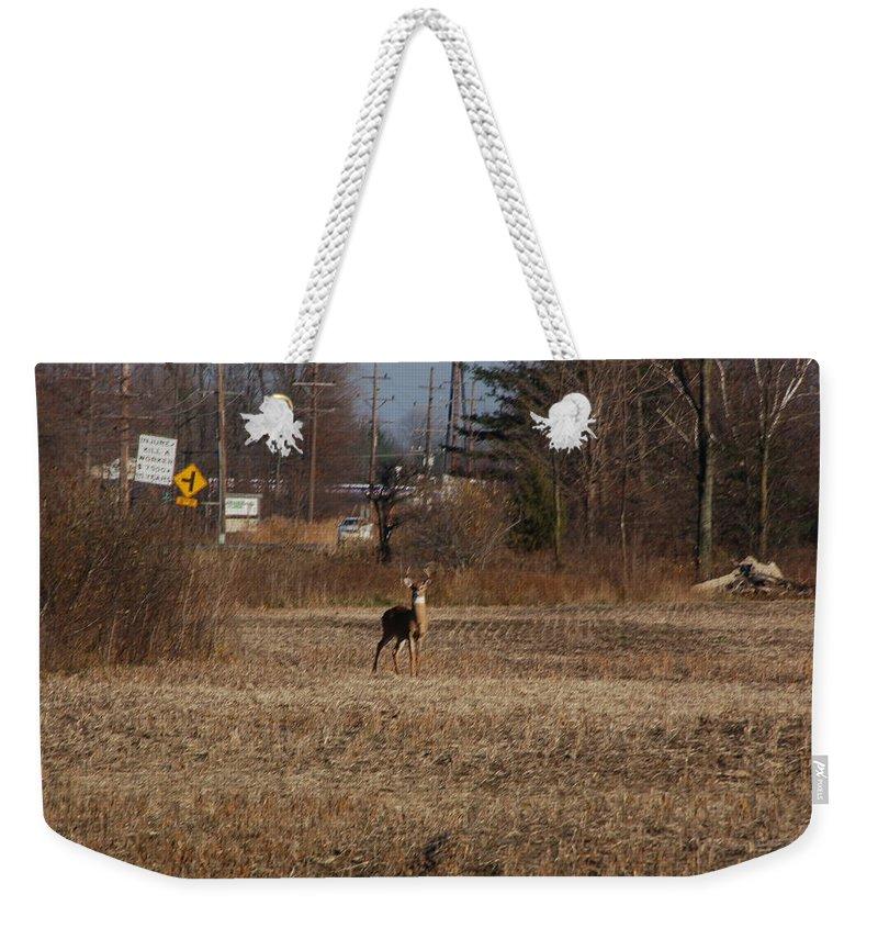 Deer Weekender Tote Bag featuring the photograph Whitetail Deer by Randy J Heath