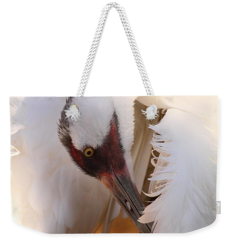Cranes Weekender Tote Bag featuring the photograph Whooping Crane Preening by Bruce J Robinson