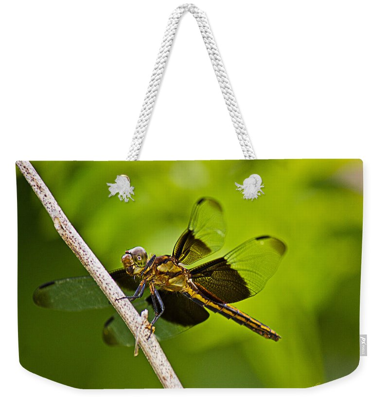 Widow Dragonfly Weekender Tote Bag featuring the photograph Widow In Waiting by Barry Jones