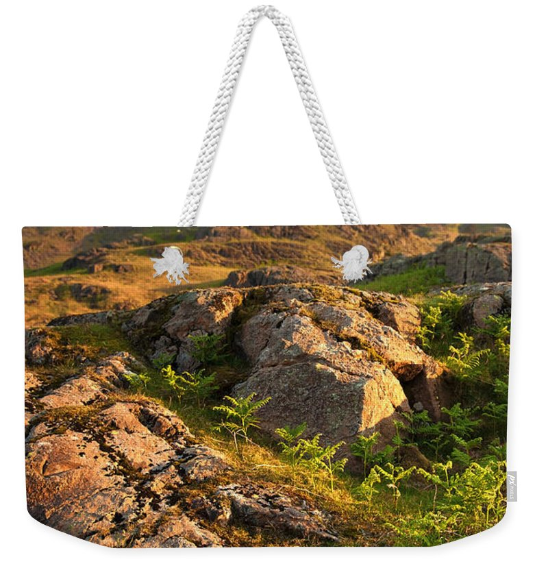 Country Weekender Tote Bag featuring the photograph Wild Fern by Svetlana Sewell