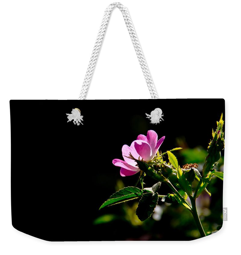 Galls Creek Weekender Tote Bag featuring the photograph Wild Rose Along Galls Creek by Mick Anderson