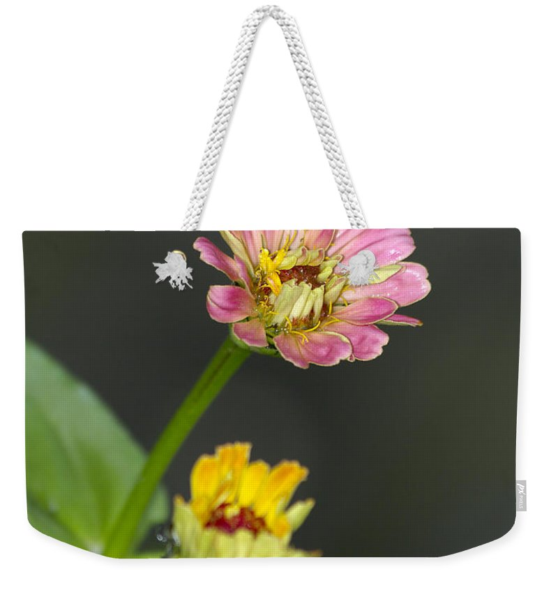 Wildflowers Weekender Tote Bag featuring the photograph Wildflowers by Betsy Knapp
