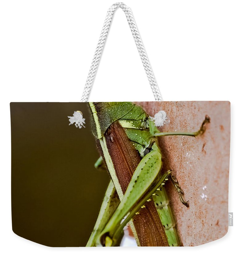 Grasshopper Weekender Tote Bag featuring the photograph Wings In Brown by DigiArt Diaries by Vicky B Fuller