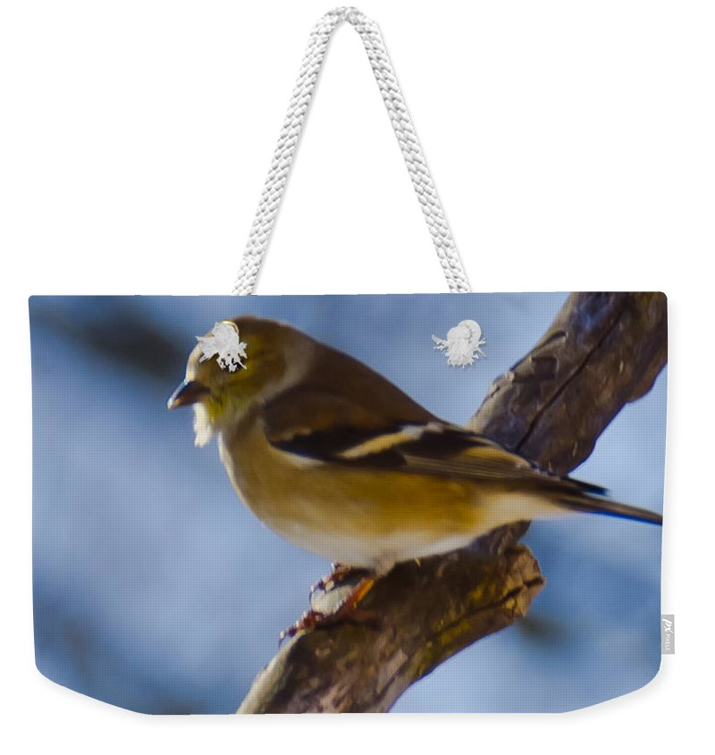 Animals Weekender Tote Bag featuring the photograph Winter Bird by LeeAnn McLaneGoetz McLaneGoetzStudioLLCcom