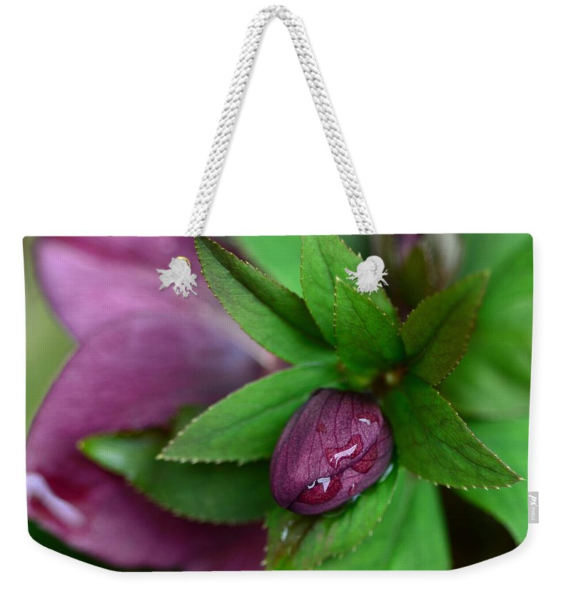 Hellebore Weekender Tote Bag featuring the photograph Winter Blooms by Lisa Phillips