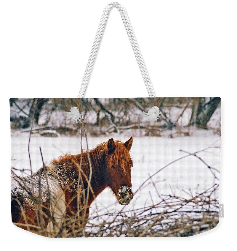 Landscape Weekender Tote Bag featuring the photograph Winter Horse Landscape by Steve Karol