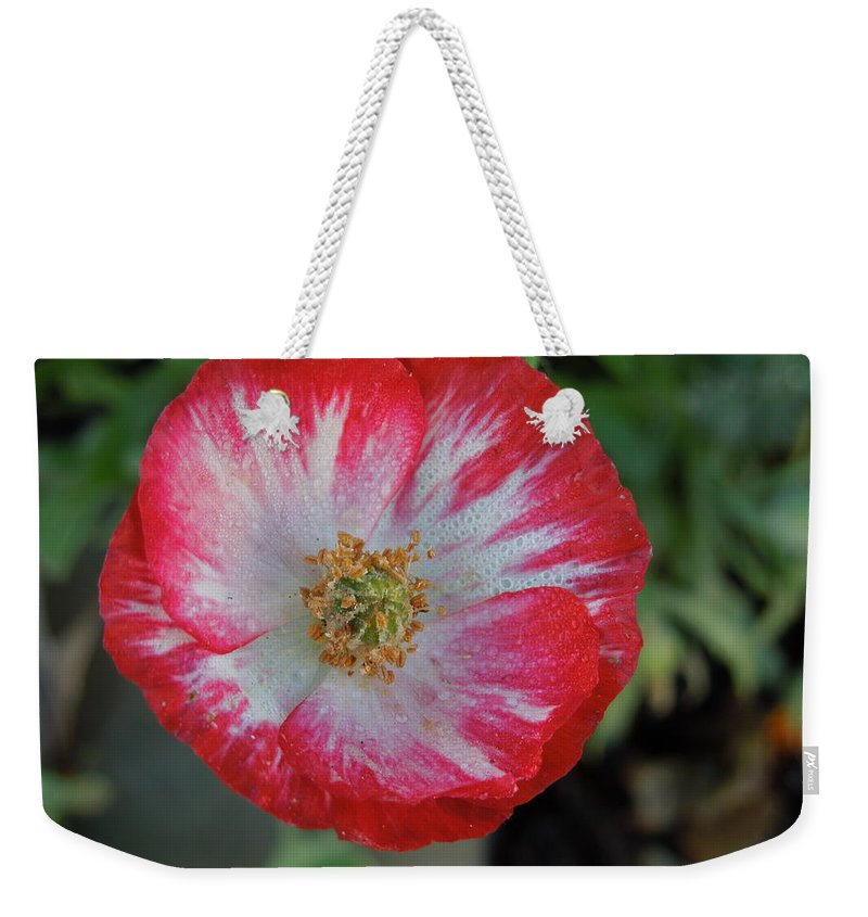Flowers Weekender Tote Bag featuring the photograph Winter Poppy by Diana Hatcher