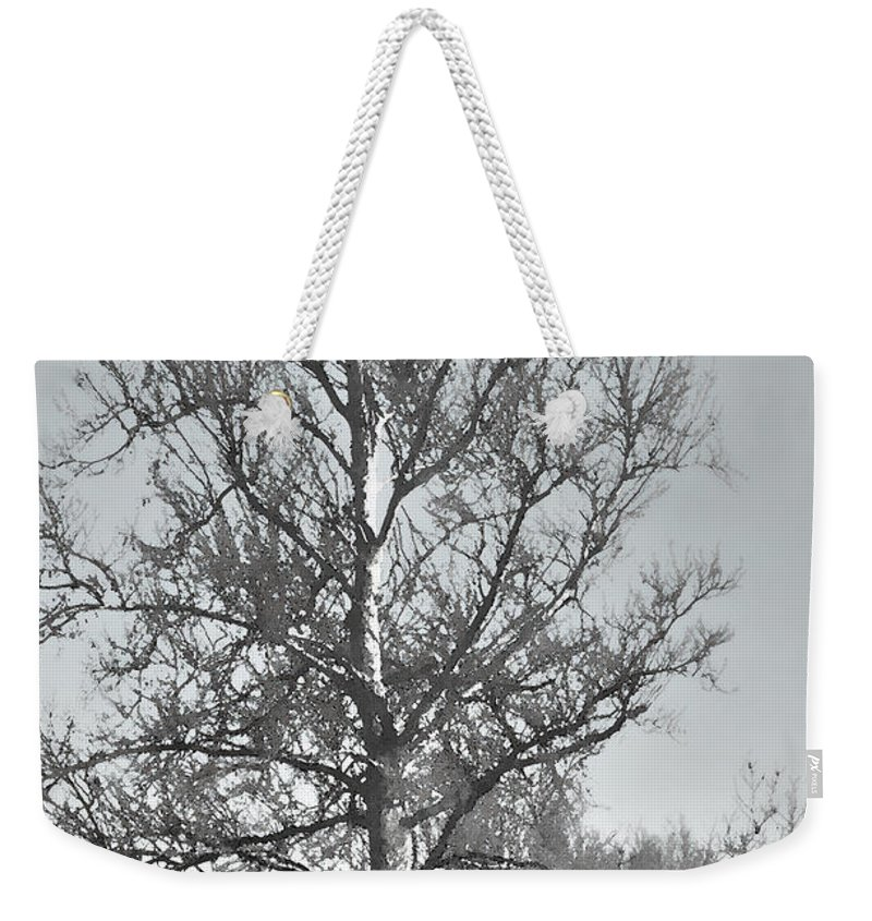 Nature Weekender Tote Bag featuring the photograph Winter Sycamore by Debbie Portwood