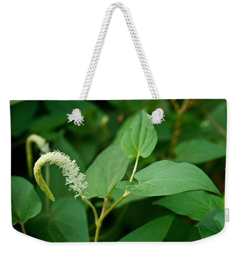 Woodland Weekender Tote Bag featuring the photograph Woodland Flower 1 by Douglas Barnett