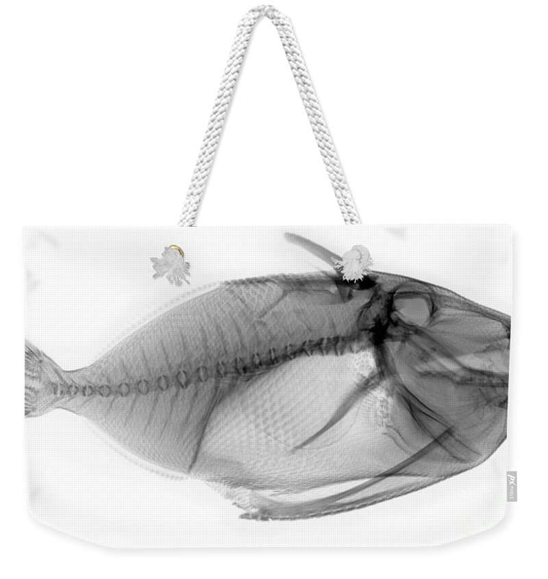 X-ray Weekender Tote Bag featuring the photograph X-ray Of A Clown Triggerfish by Ted Kinsman