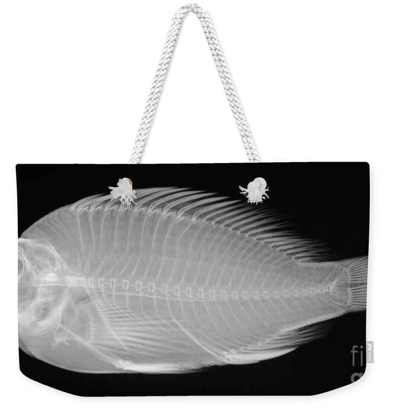 Radiograph Weekender Tote Bag featuring the photograph X-ray Of A Flame Hawkfish by Ted Kinsman