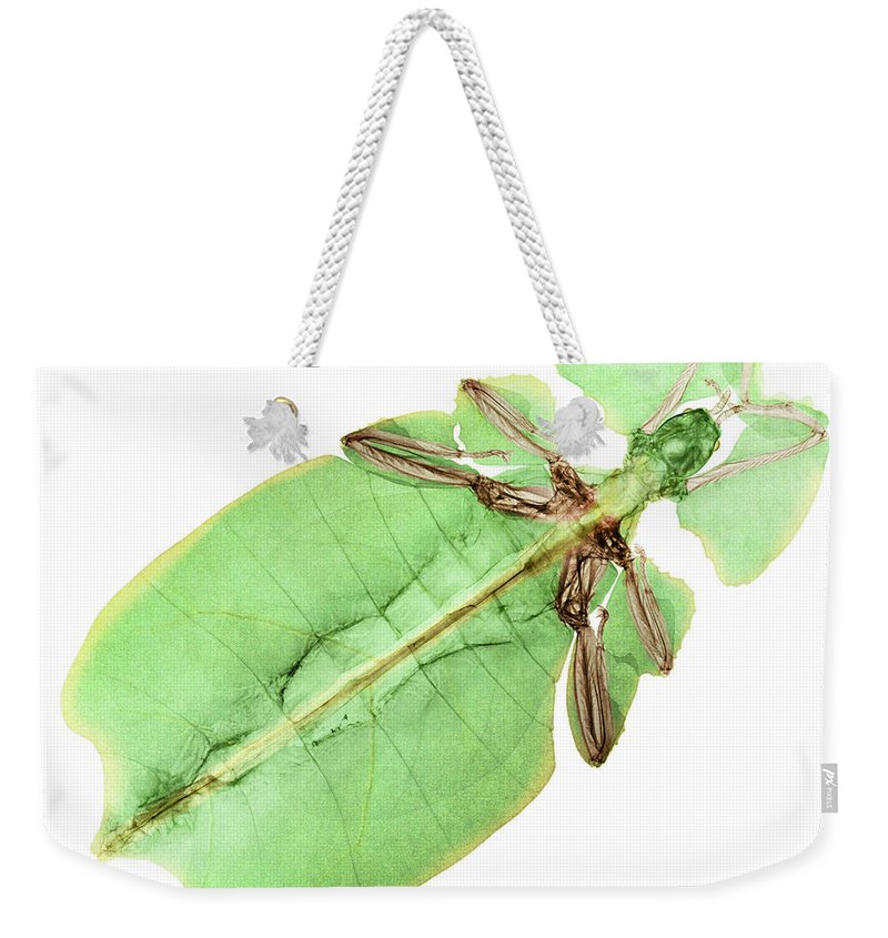 Giant Leaf Insect Weekender Tote Bag featuring the photograph X-ray Of A Giant Leaf Insect by Ted Kinsman