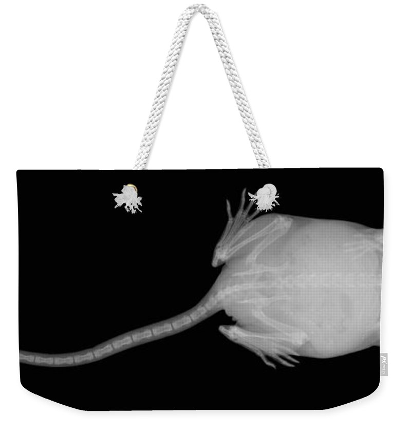 X-ray Weekender Tote Bag featuring the photograph X Ray Of A Mouse by Ted Kinsman