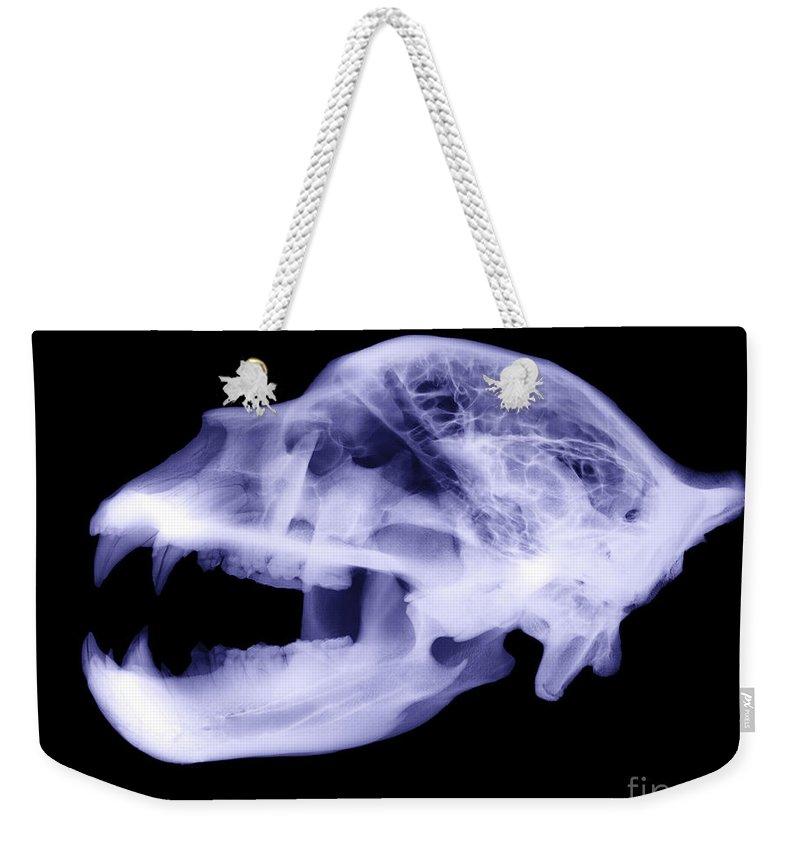 Kodiak Bear Weekender Tote Bag featuring the photograph X-ray Of Kodiak Bear Skull by Ted Kinsman