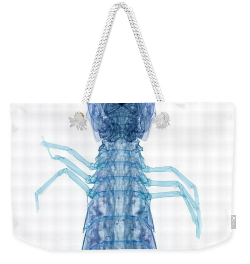 Mantis Shrimp Weekender Tote Bag featuring the photograph X-ray Of Mantis Shrimp by Ted Kinsman