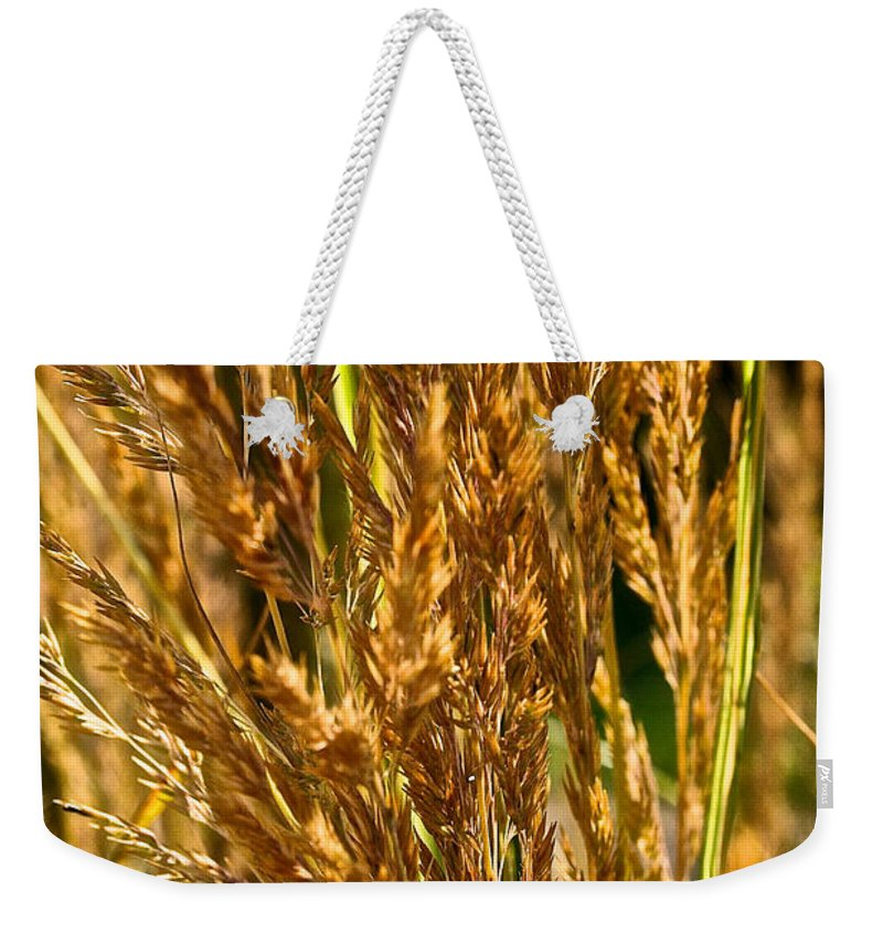 Grass Weekender Tote Bag featuring the photograph Yellow Feather Reed Grass by Susan Herber