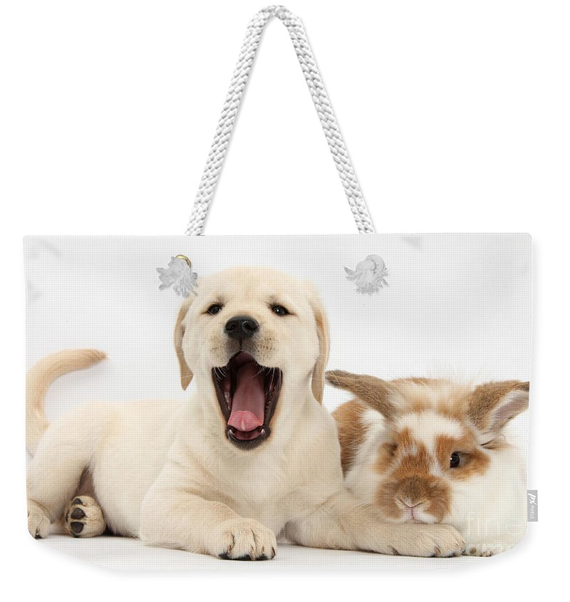 Nature Weekender Tote Bag featuring the photograph Yellow Lab Puppy With Rabbit by Mark Taylor