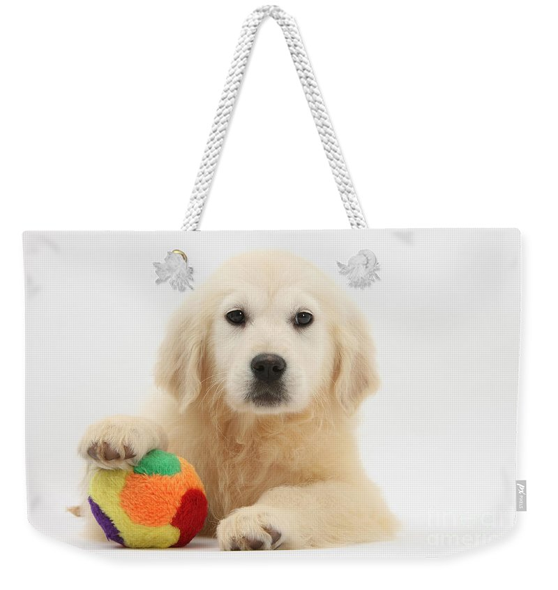 Animal Weekender Tote Bag featuring the photograph Yellow Labrador Retriever Pup by Mark Taylor