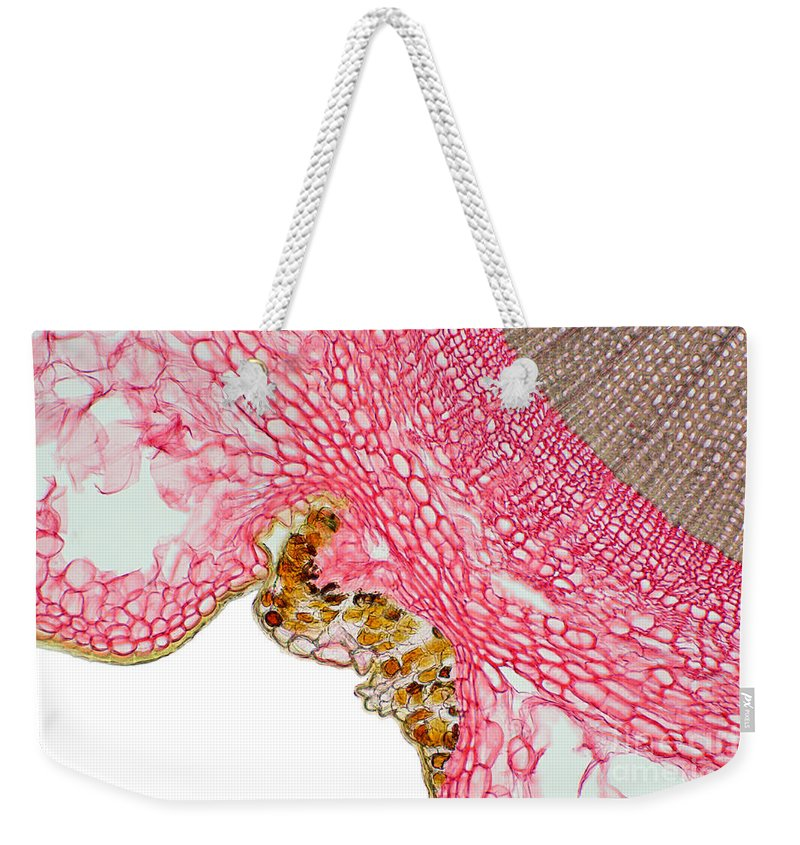 Science Weekender Tote Bag featuring the photograph Yew Stem by Ted Kinsman
