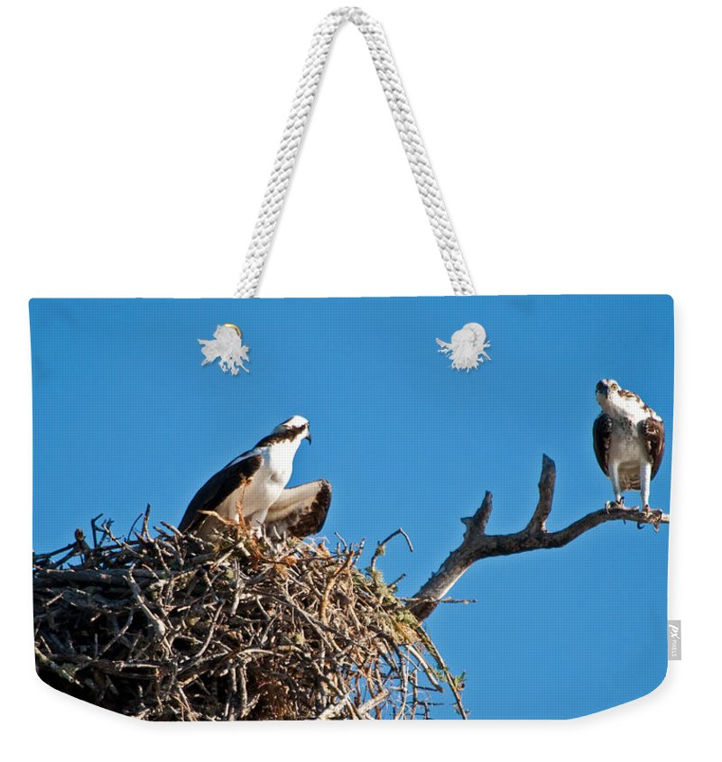 Osprey Weekender Tote Bag featuring the photograph You Lookin At Me by Christine Stonebridge