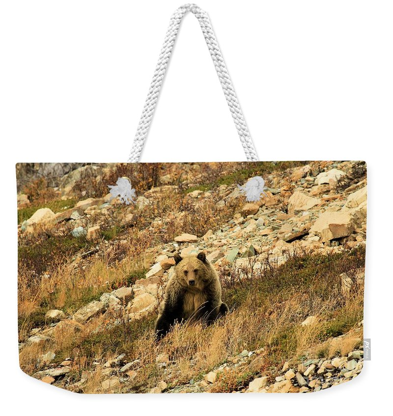 Grizzly Bear Weekender Tote Bag featuring the photograph You Want My Photo? by Adam Jewell