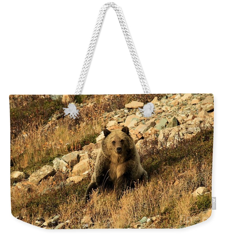 Grizzly Bear Weekender Tote Bag featuring the photograph You Whistling At Me? by Adam Jewell
