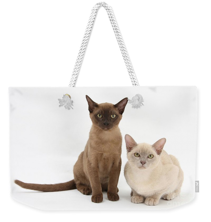 Animal Weekender Tote Bag featuring the photograph Young Burmese Cats by Mark Taylor