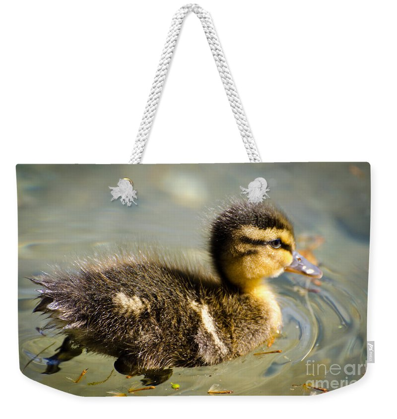 Duck Weekender Tote Bag featuring the photograph Young Duck by Mats Silvan