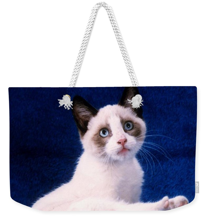 Youngster Weekender Tote Bag featuring the photograph Young Mixed Breed Grooms by Larry Allan