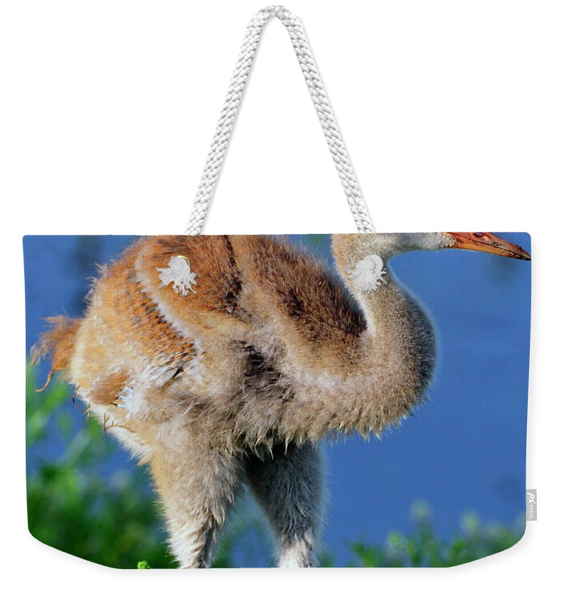 Sandhill Weekender Tote Bag featuring the photograph Young Sandhill Crane by Bill Dodsworth
