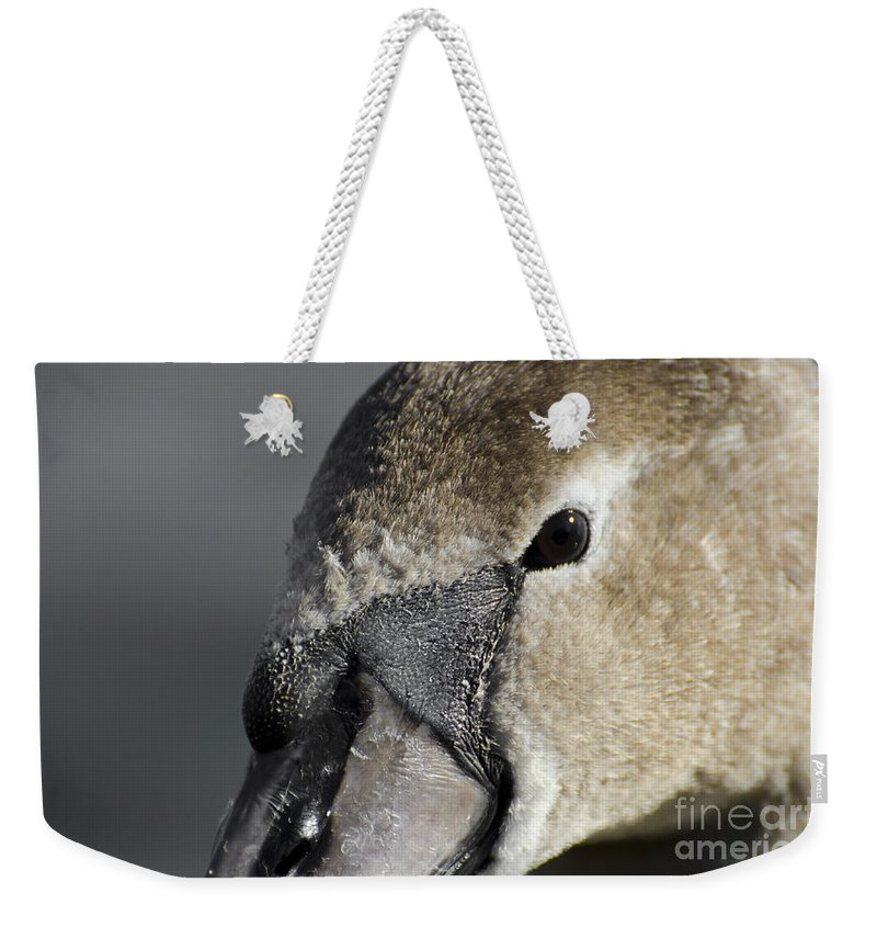 Swan Weekender Tote Bag featuring the photograph Young Swan by Mats Silvan