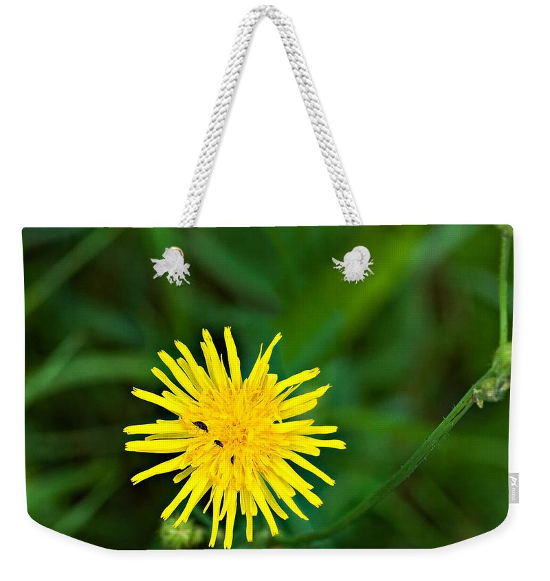 Flowers Weekender Tote Bag featuring the photograph Yummy Yellow by Steve Harrington