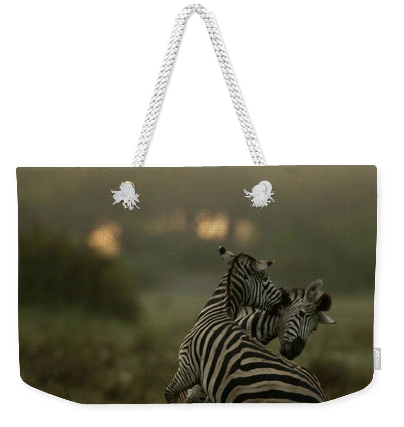 Nobody Weekender Tote Bag featuring the photograph Zebra Equus Burchelli by Beverly Joubert