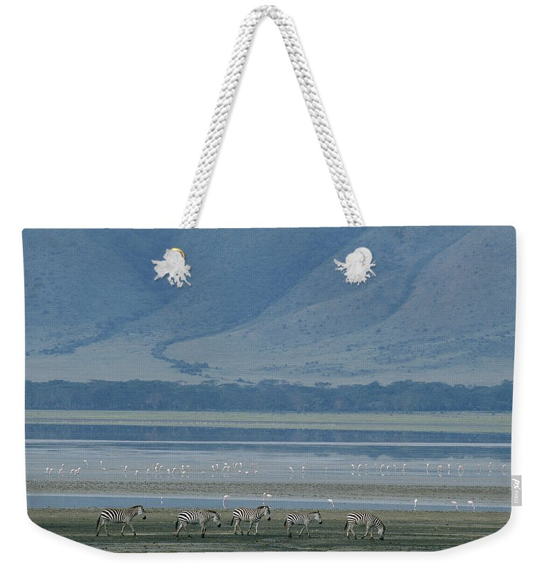 Africa Weekender Tote Bag featuring the photograph Zebras And Pink Flamingos, Ngorongoro by Skip Brown
