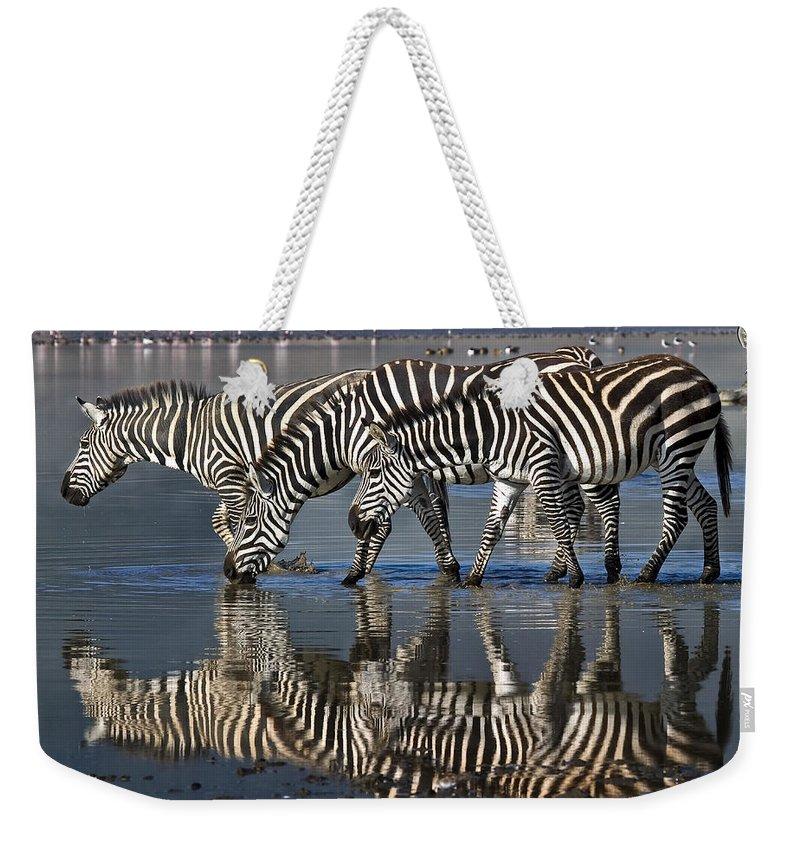 Ngorongoro Crater Weekender Tote Bag featuring the photograph Zebras Drinking Ngorongoro Crater Tanzania by Boyd Norton