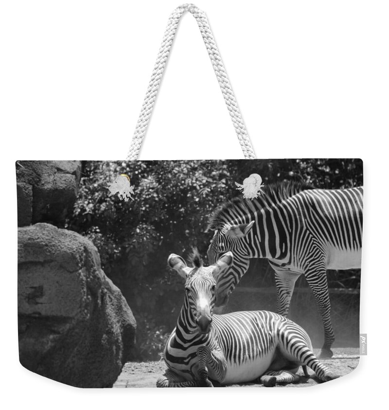 Animal Weekender Tote Bag featuring the photograph Zebras In Black And White by Rob Hans