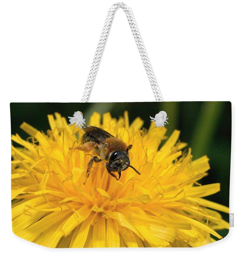 Lehtokukka Weekender Tote Bag featuring the photograph A Bee In A Dandelion by Jouko Lehto
