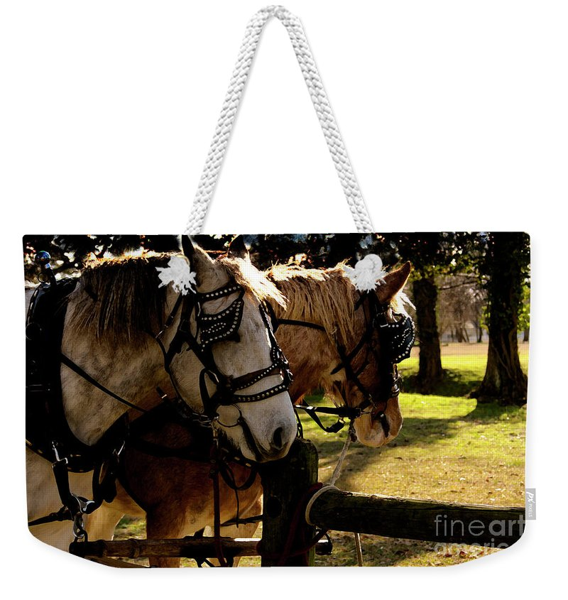 Horses Weekender Tote Bag featuring the photograph Carriage Ride by Kim Henderson