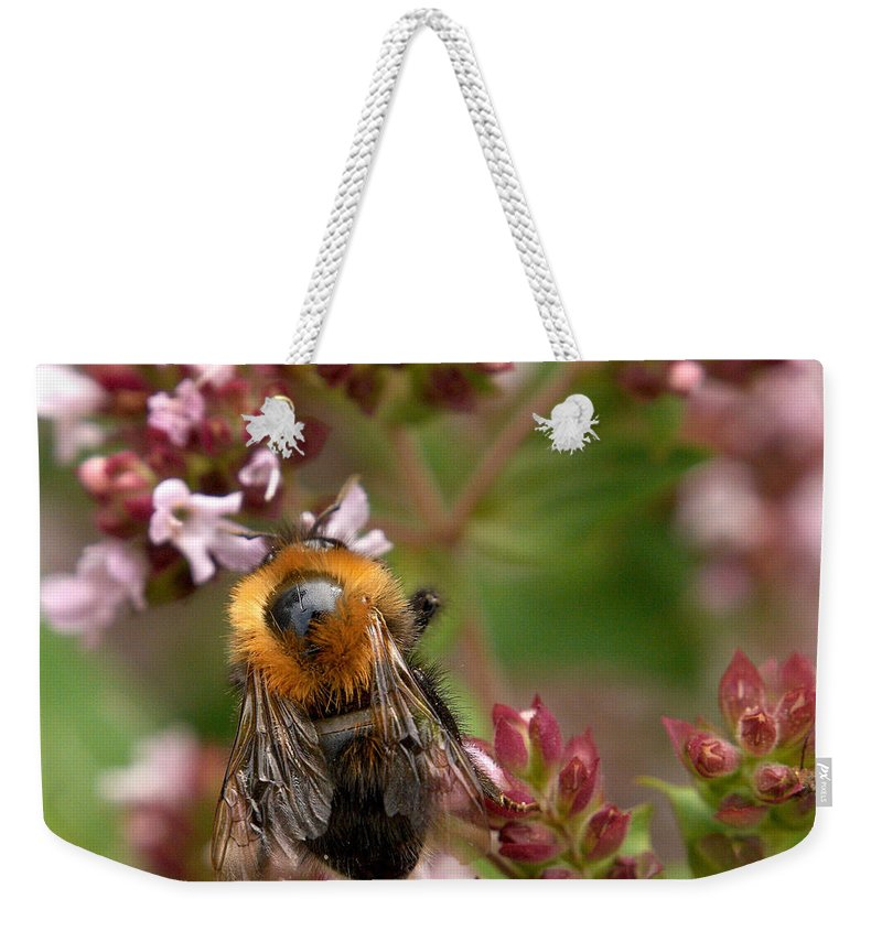 Lehtokukka Weekender Tote Bag featuring the photograph Cuckoo Bumblebee 2 by Jouko Lehto