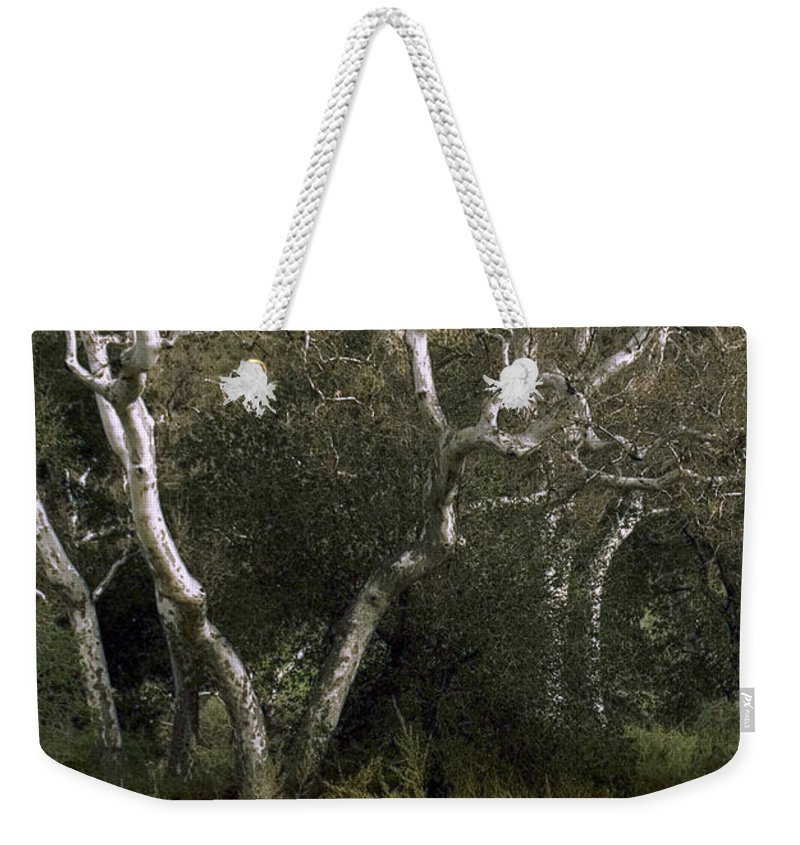 Tree Weekender Tote Bag featuring the photograph Dv Creek Trees by Karen W Meyer