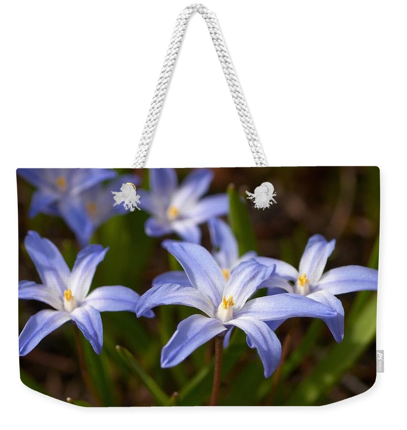 Lehtokukka Weekender Tote Bag featuring the photograph Glory Of The Snow 1 by Jouko Lehto